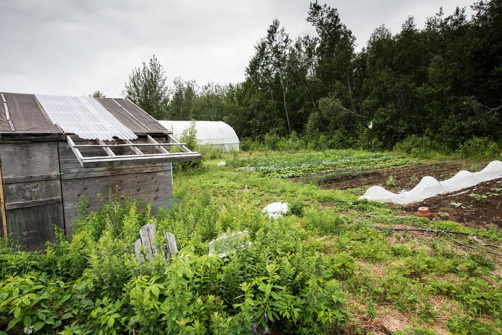 Les Jardins vert l'avenir - Récolte de Chez Nous - Really Local Harvest