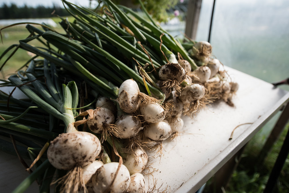 Copy of Windy Hill Farm - Récolte de Chez Nous - Really Local Harvest