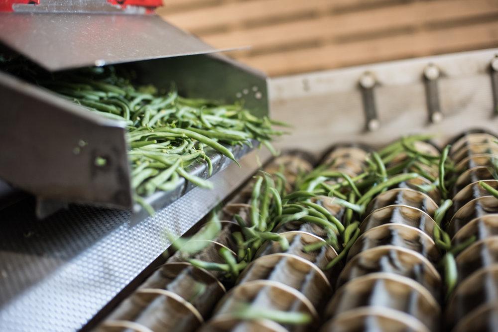 Ferme Michaud Farm - Récolte de Chez Nous - Really Local Harvest