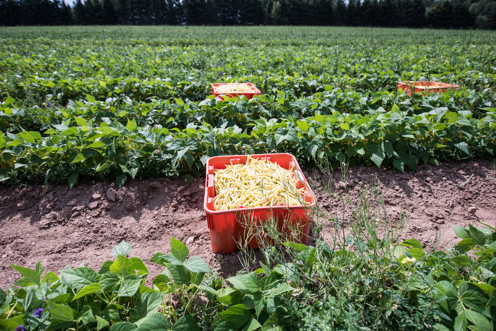 Copy of Les Digues - Récolte de Chez Nous - Really Local Harvest