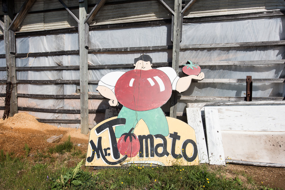 Copy of M. Tomate