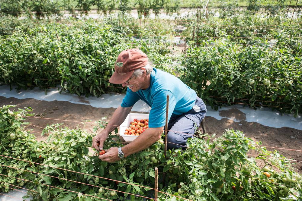 Copy of La Ferme Pouce Vert - Green Thumb Farm  - Récolte de Chez Nous - Really Local Harvest
