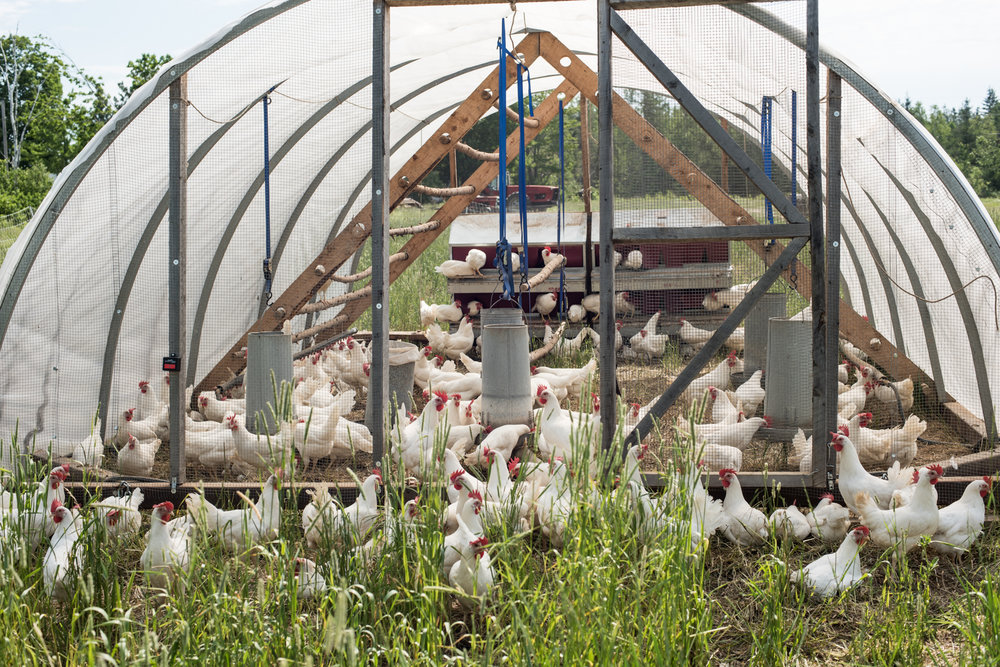 Copy of Ferme Terre Partagée Farm - Récolte de Chez Nous - Really Local Harvest