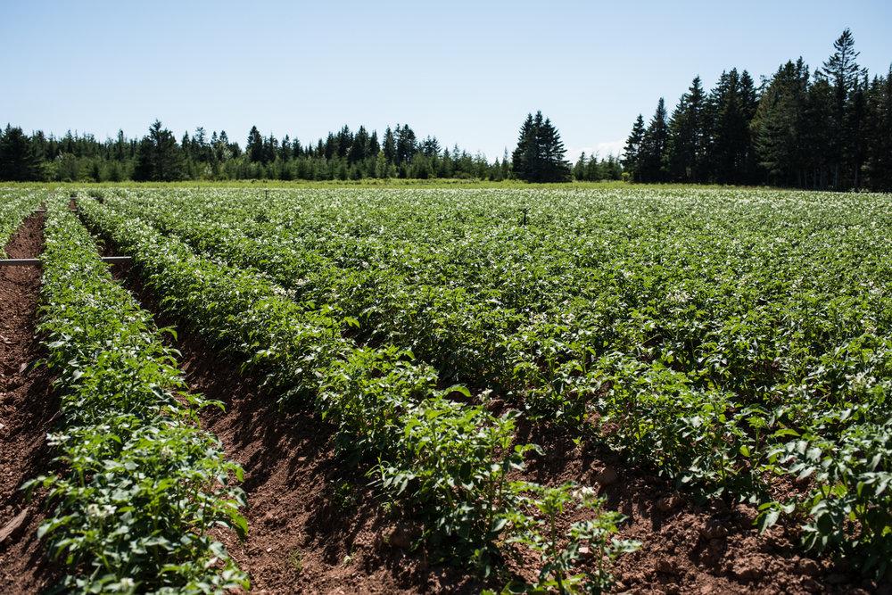 Copy of Nature's Route Farm - Récolte de Chez Nous - Really Local Harvest