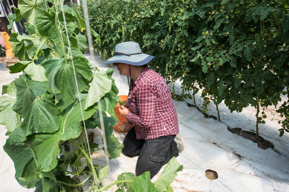 Nature's Route Farm - Récolte de Chez Nous - Really Local Harvest