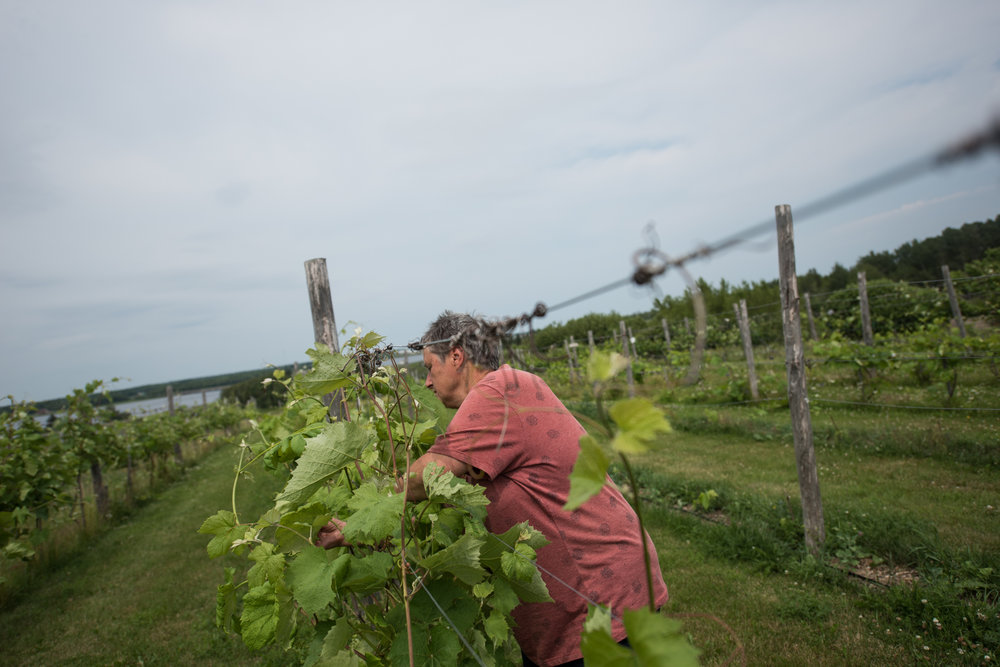 Copy of La Ferme Marcel Goguen  - Récolte de Chez Nous - Really Local Harvest