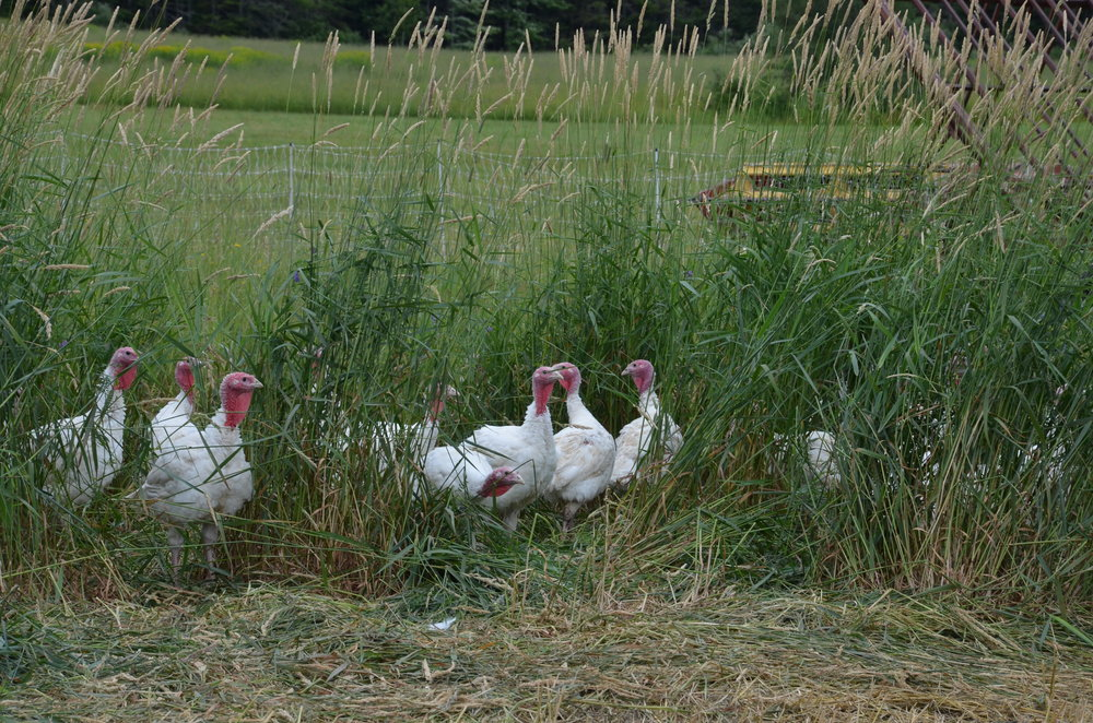 Copy of Springbrook Farm - Really Local Harvest - Récolte de Chez Nous