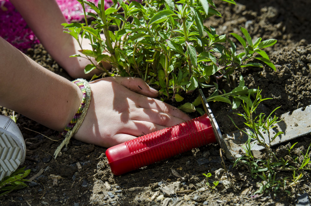 2018-05May-24 Frankford Pause Planting Day_0123.jpg