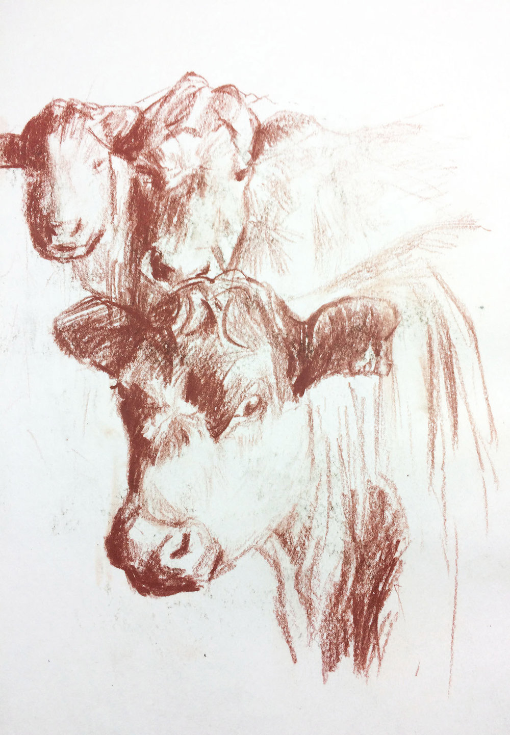 cows-sketch.jpg