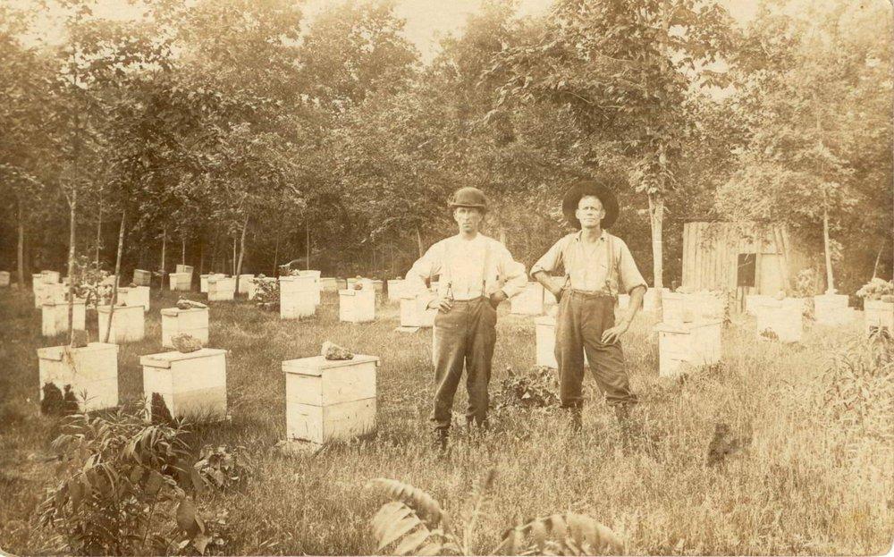 Beehives 001.jpg