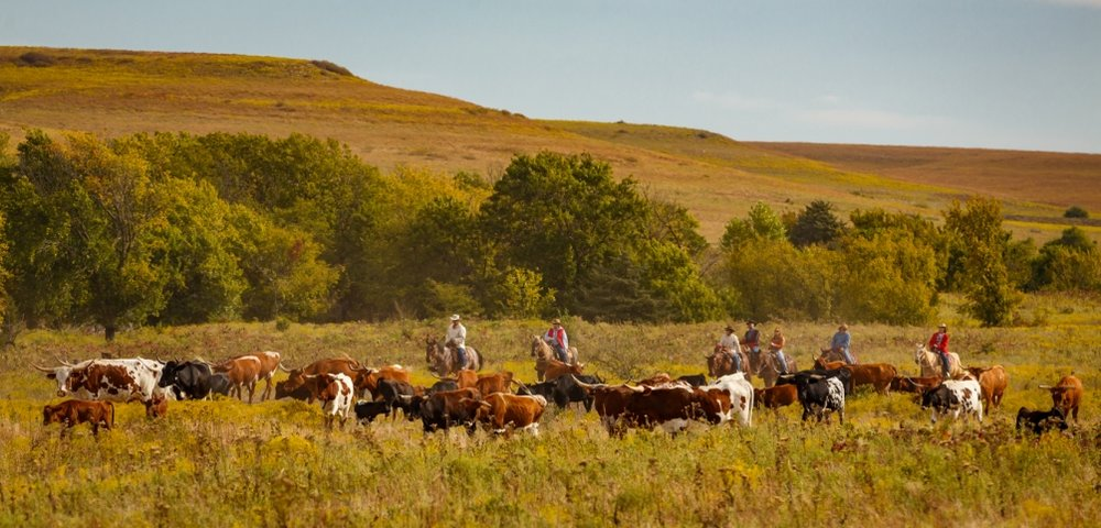 Flying W Ranch cattle drives