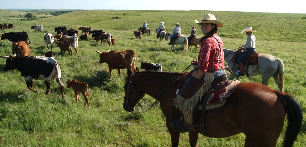 Traditional cattle drive at the Flying W Ranch
