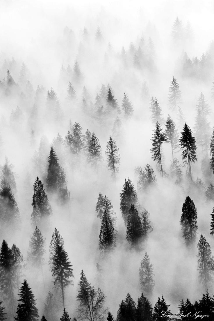 Hidden-In-Fog-1