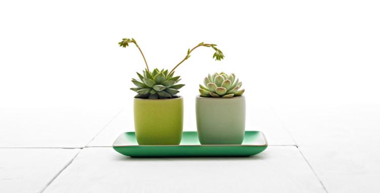 980x499-s15-succulents