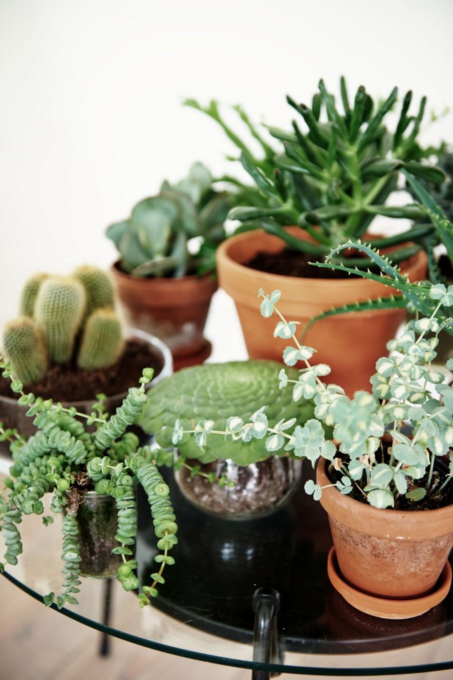9-planten-verzameling