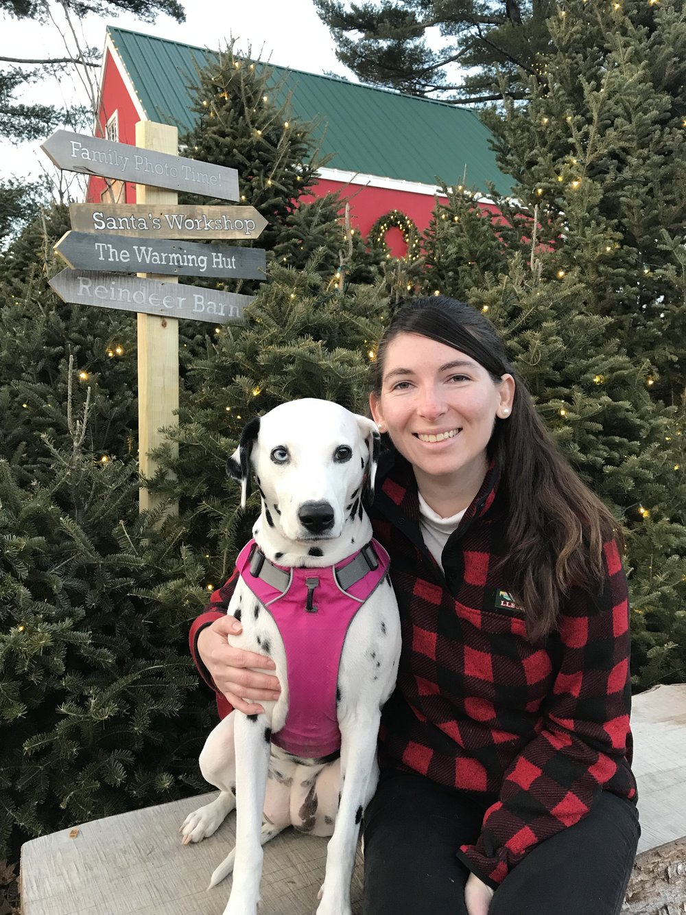 Exploring the Discovery Forest at L.L. Bean Northern Lights celebration in Freeport, ME with my pup.