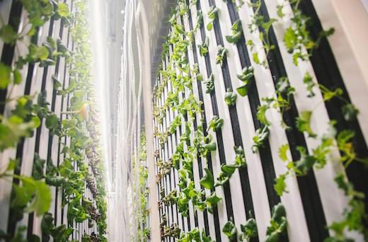 Growtainer-farms.jpg