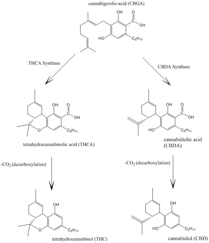 Cannabidiol_and_THC_Biosynthesis.jpg
