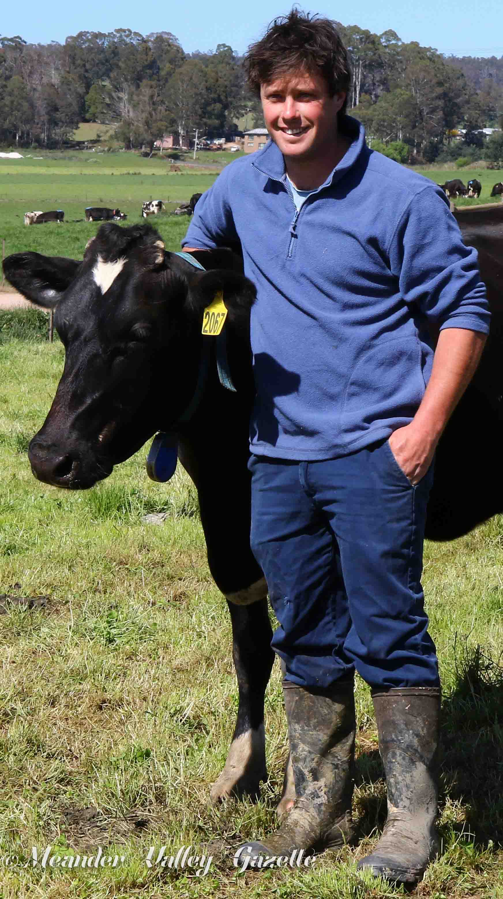 Nick Dornauf with milking cow