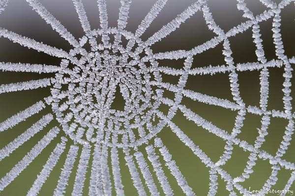 frosted-spiderweb-in-st-marys-leanne-osmond-leeo-photography