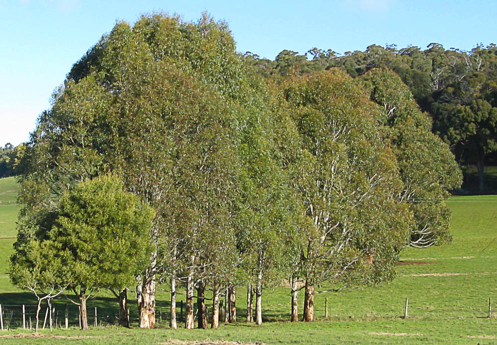 Trees grown by Nell using local seed