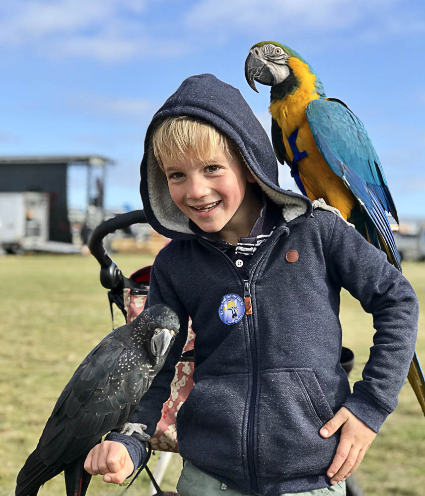 Dougal Folder 7 years with Gomez and friends. Exotic birds is a new attraction at the 2018 Deloraine Show.