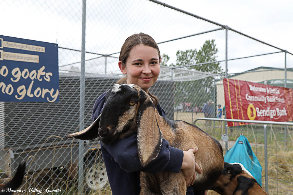 Anna Shephard with 5-month-old Anglo Nubian goat 'Peanuts' at the Chudleigh Show   Photos | Mike Moores