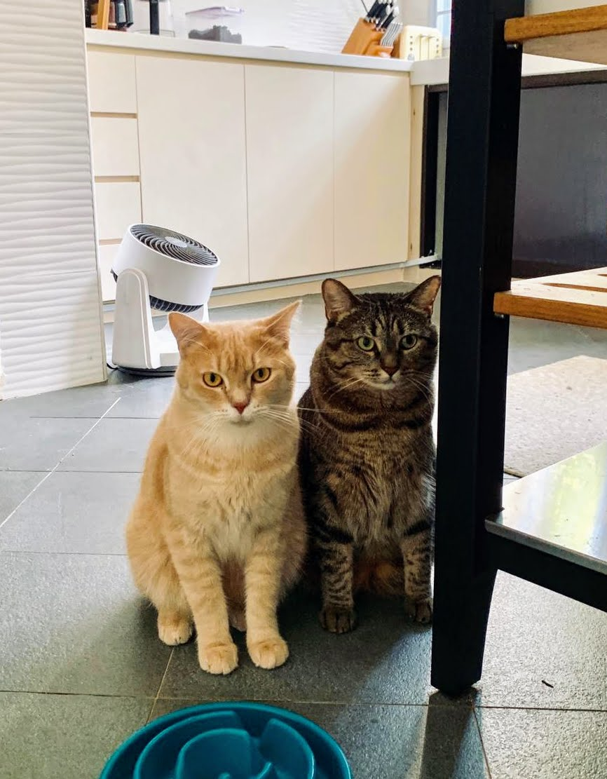 Mochi (left) and Macaroni (right)