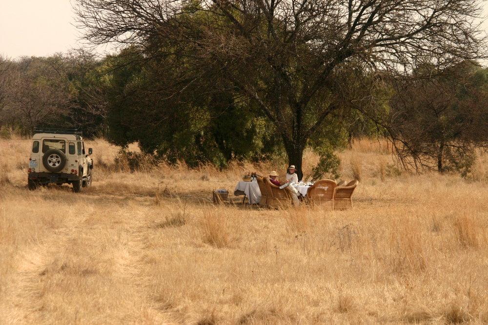 Nostalgic Safari