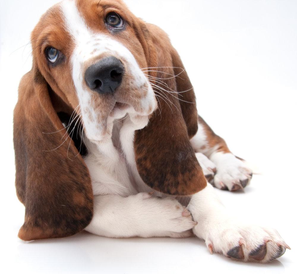 Pet Loss - Click Here