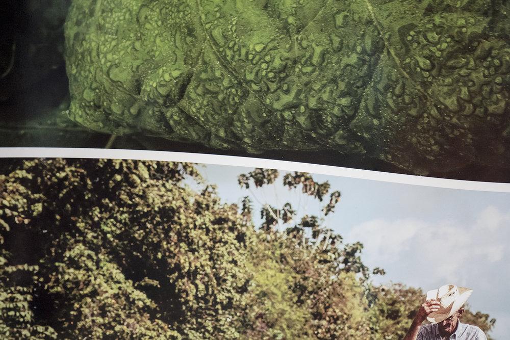 Traviesa.LandscapeLandscapes-08.JPG