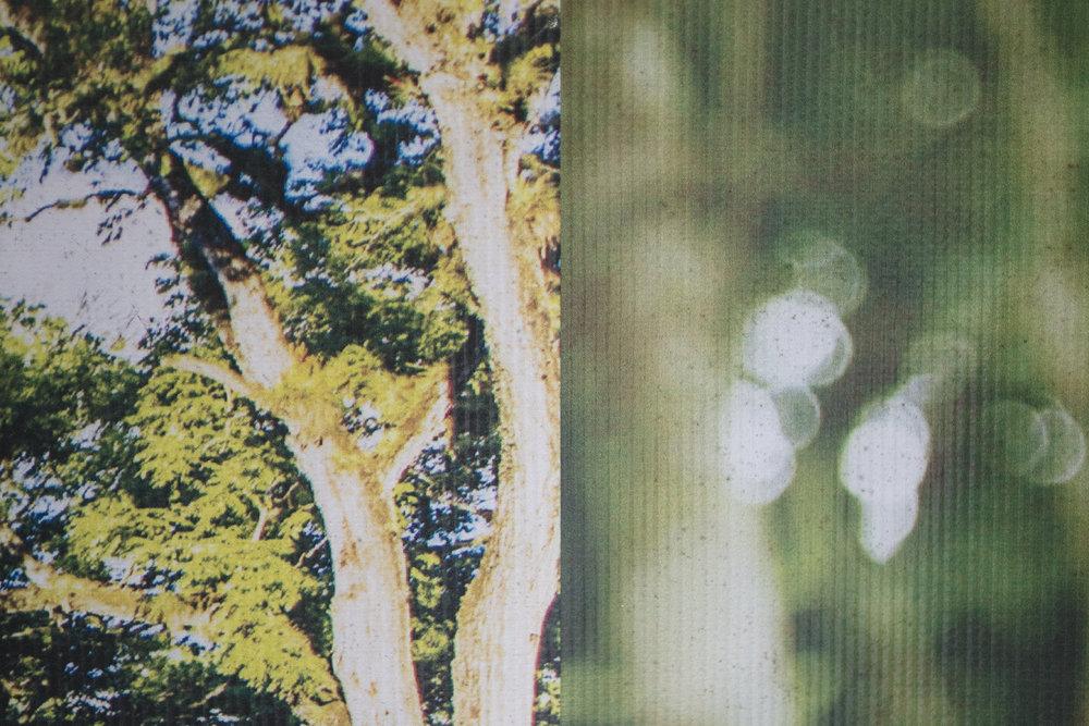 Traviesa.LandscapeLandscapes-13.JPG