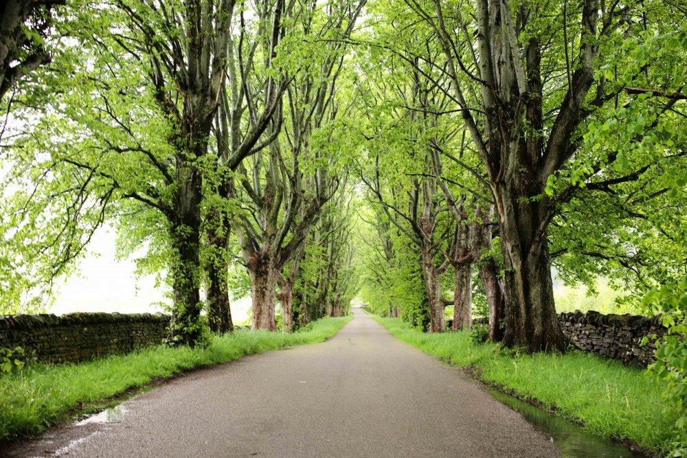 tree-road-1024x683.jpg