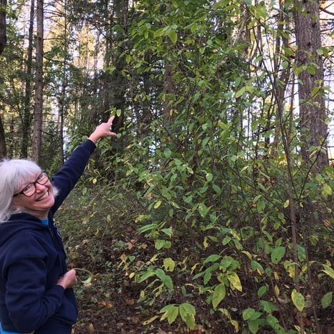 Hmmm, which question to answer...'how to resolve Chilliwack's homeless problem?'.....or....'what is that strange vine strangling the cedar?'. .. Question 2 Answer: wild clematis (invasive species)! .. Question 1 Answer: deborasoutar.com ☑️
