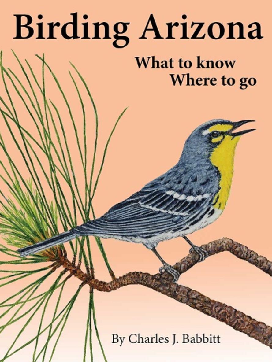 birding_Arizona.PNG