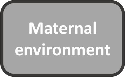 maternal environment.png