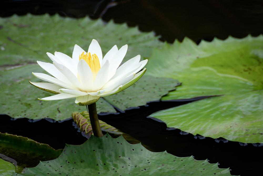 catherine-abby-lily.jpg