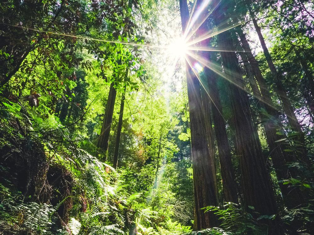 muir-woods-short.jpg