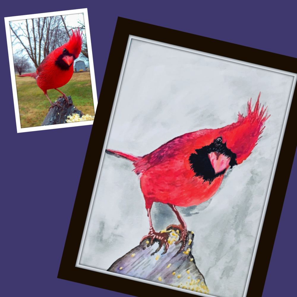 Cardinal for Gallery.png