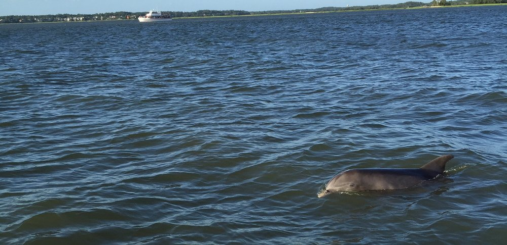 dolphinWeb.jpg