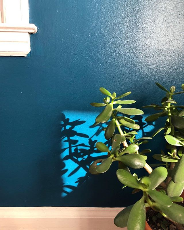 Light is delightful....#loveyourplants #jade #blues #atlantahomeinspector #atlantahomeinspection# #atlantarealestate