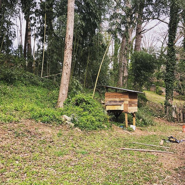 It's time....I've grown my own food, fished for it, hunted it....and now time to raise it.  Free range chickens coming soon to Casa Sidecar... #atlantahomes #atlantahomeinspector #atlantahomeinspections #atlantarealestate #eggs #chickencoopsofinstagram #cloverplant #savethebees