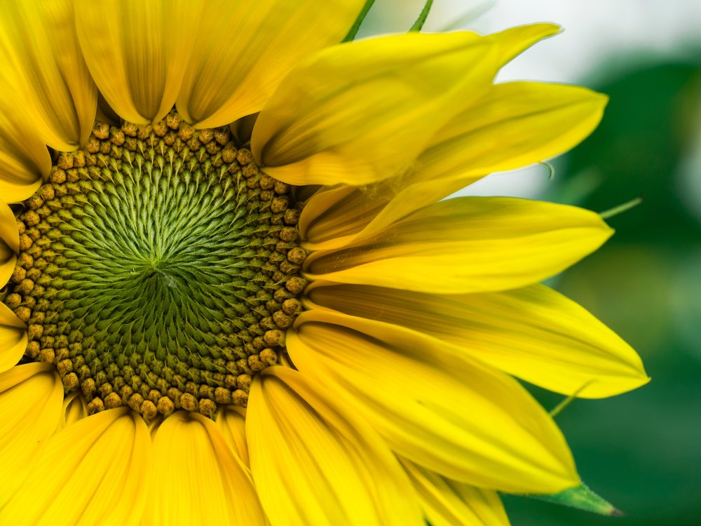 Mindful Living Yellow Flower.jpg