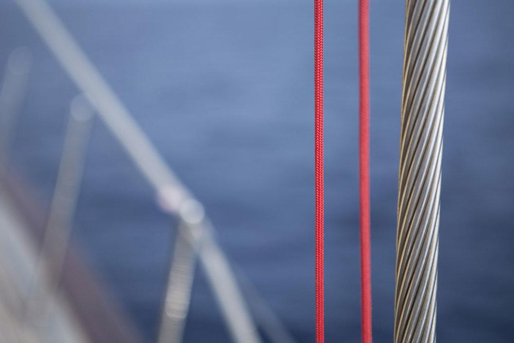 portobello-close-up.jpg