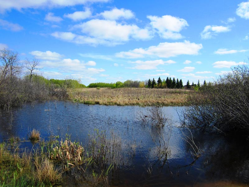 applewood-photo03-acreage-lots.jpg