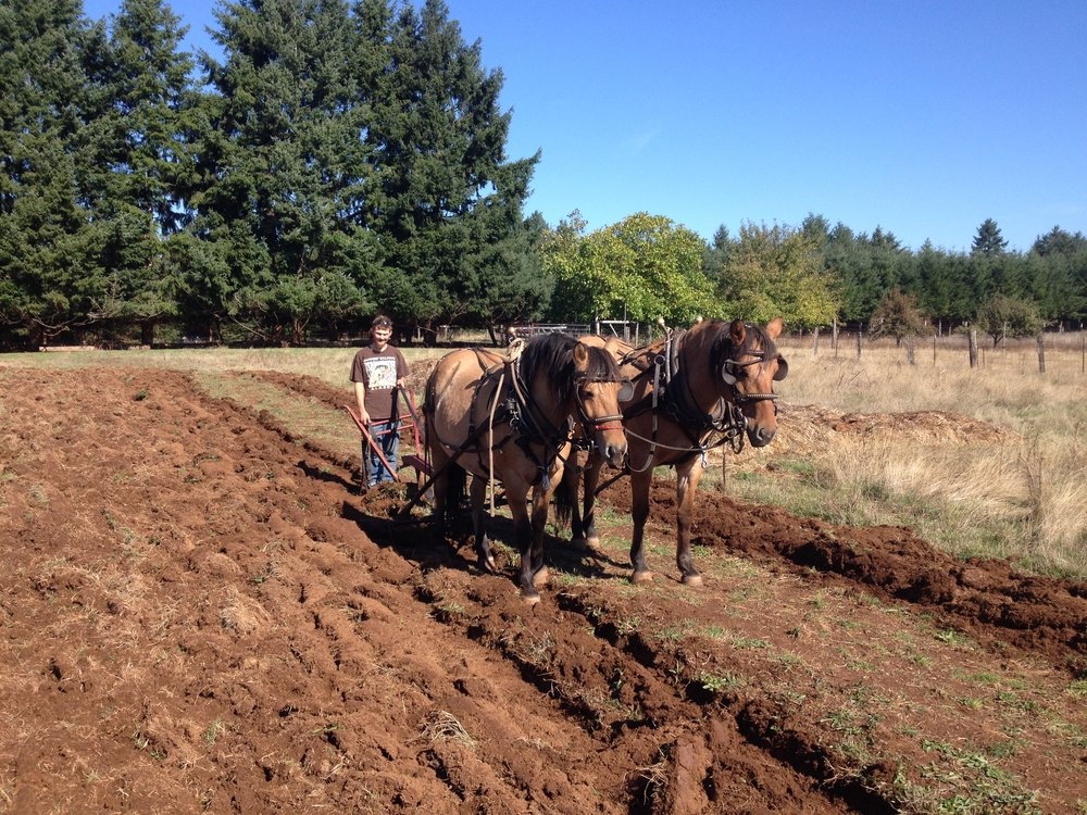 Plowing With Hidalga And Oriana