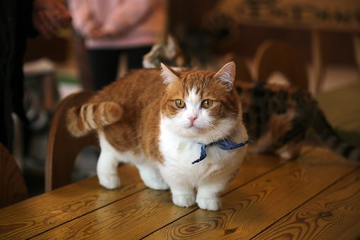 cat-2227906__340.jpg