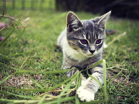 kitten-1169507__340.jpg