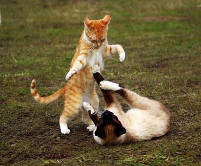 cat-1234947__340.jpg