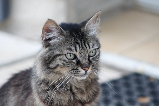 cat-2610494__340.jpg